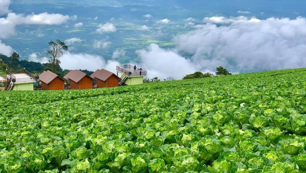 The Future for People Living in Phetchabun – Tobacco Control Research and Knowledge Management Center (TRC)